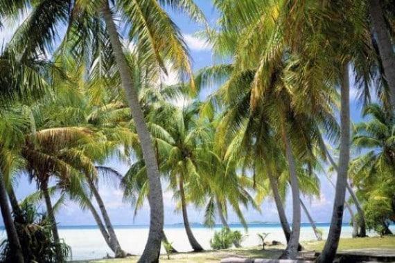 The Brando en Polynésie française 4