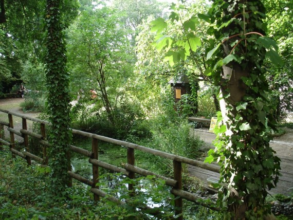 jardin sauvage Saint-Vincent 2