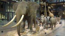 Plongez au coeur de Grande Galerie de l'Evolution au Muséum national d'Histoire Naturelle